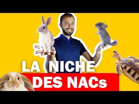 Idée de niche en dropshipping - Les animaux NAC et le chinchilla 🐭